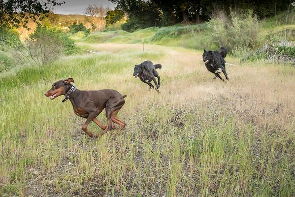 03 30 2016 CREEK DOGS-1575