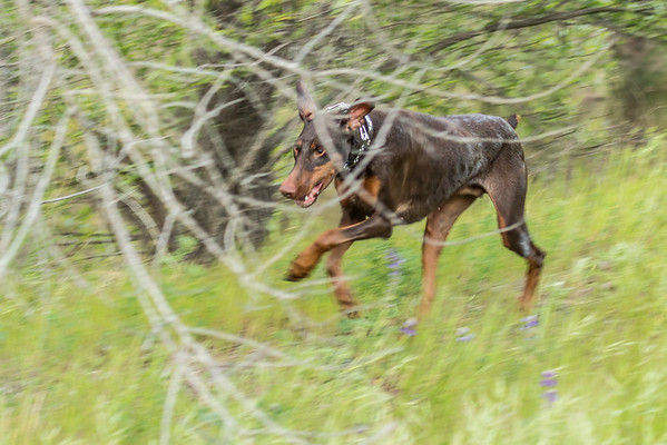03 30 2016 CREEK DOGS-0773