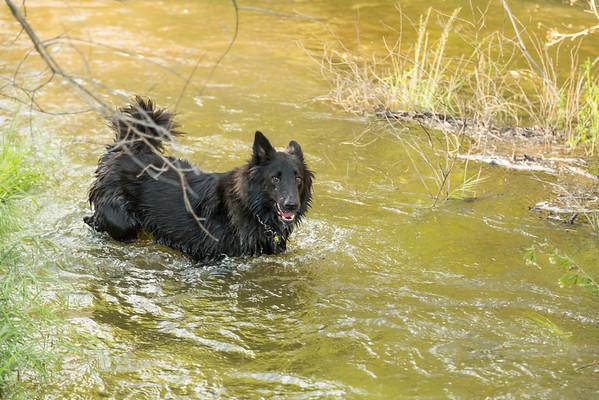 03 30 2016 CREEK DOGS-1472