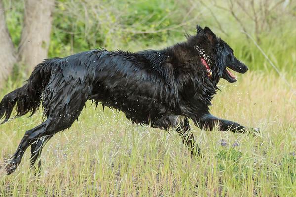 03 30 2016 CREEK DOGS-1539