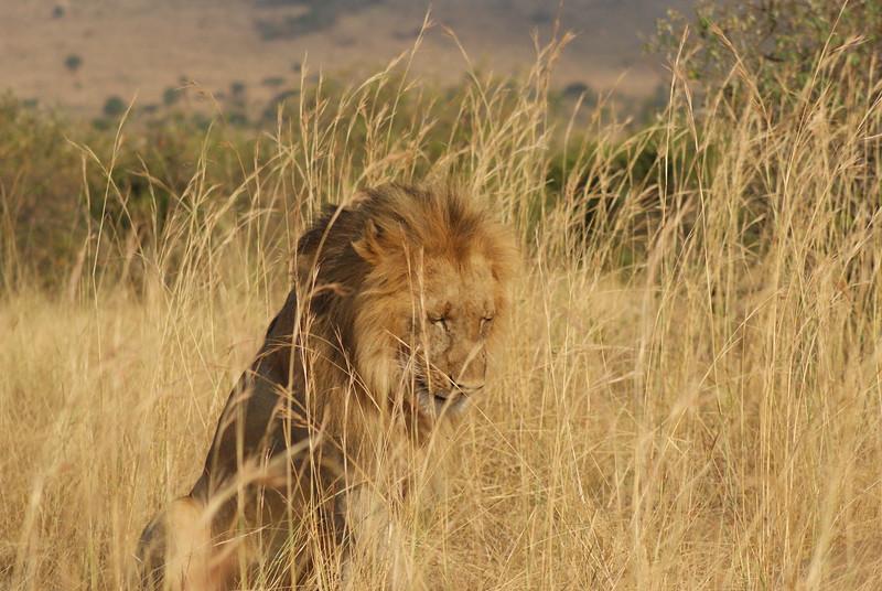 Fotograaf: Gator Dirks. Masai Mara Sopa Game Lodge, Kenia.