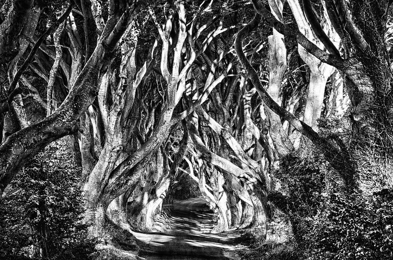 Fotograaf: Ron van Gool. The Dark Hedges - Noord Ierland bekend als de King's Road uit Games Of Thrones