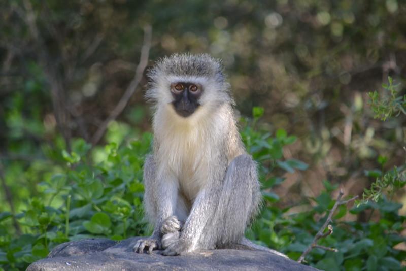 Fotograaf: Joyce Borburgh. Vakantie in Zuid Afrika