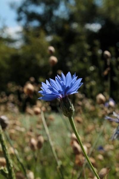 Fotograaf: Catrina van Paradijs. Blauw
