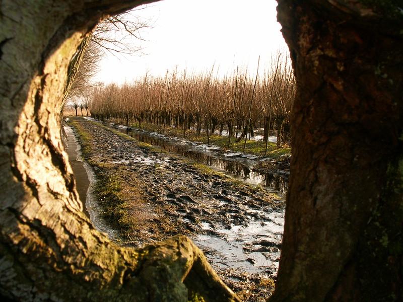Fotograaf: Bert Bosch. Winters doorkijkje in de Biesbosch