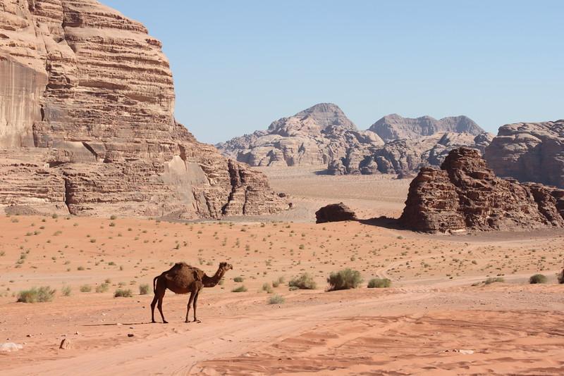 Fotograaf: Angèle van Zuilen. de rust van Wadi Rum Jordanie