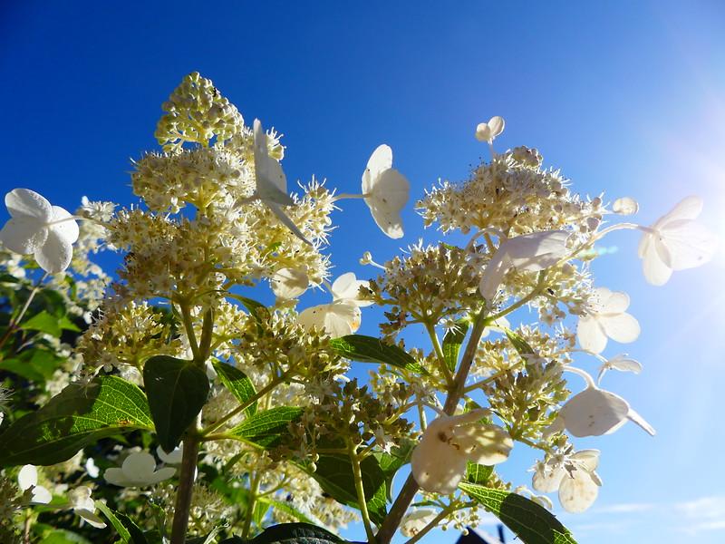 Ivonne - Geweldige bloemen in het mooie zonlicht
