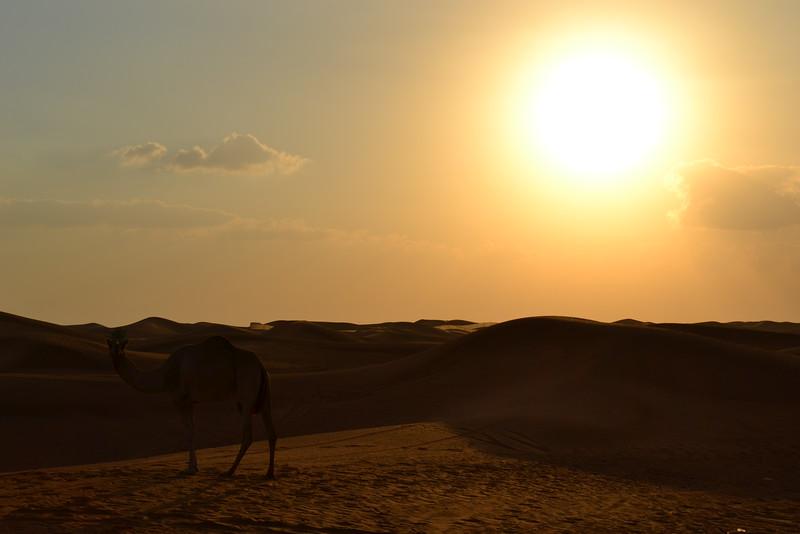 Fotograaf: Miranda Paardekooper. Jeepsafari woestijn Dubai