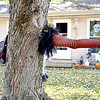 Pictured is a witch who got stuck in a tree in Watson. One of several Halloween yard decorations at the home of Chris Houghton. Charles Mills photo