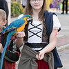 Main Street in Fitchburg was closed down on Saturday for the annual Halloween on Main Street event. Hailey von Rosenvinge dressed as a pirate had her 3 year old Blue Golden Macaw named Journey with her for the event. SENTINEL & ENTERPRISE/JOHN LOVE