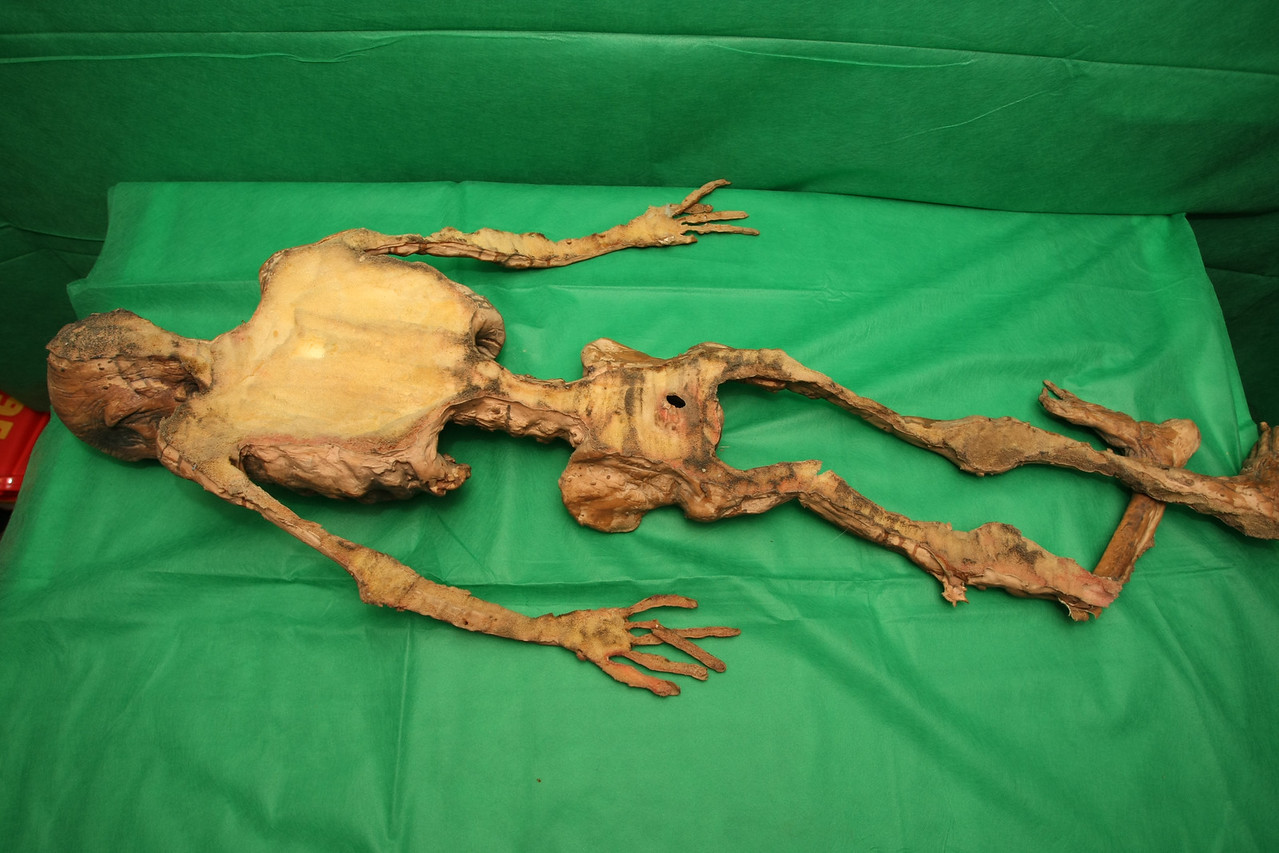 Skeleton 1 - back view