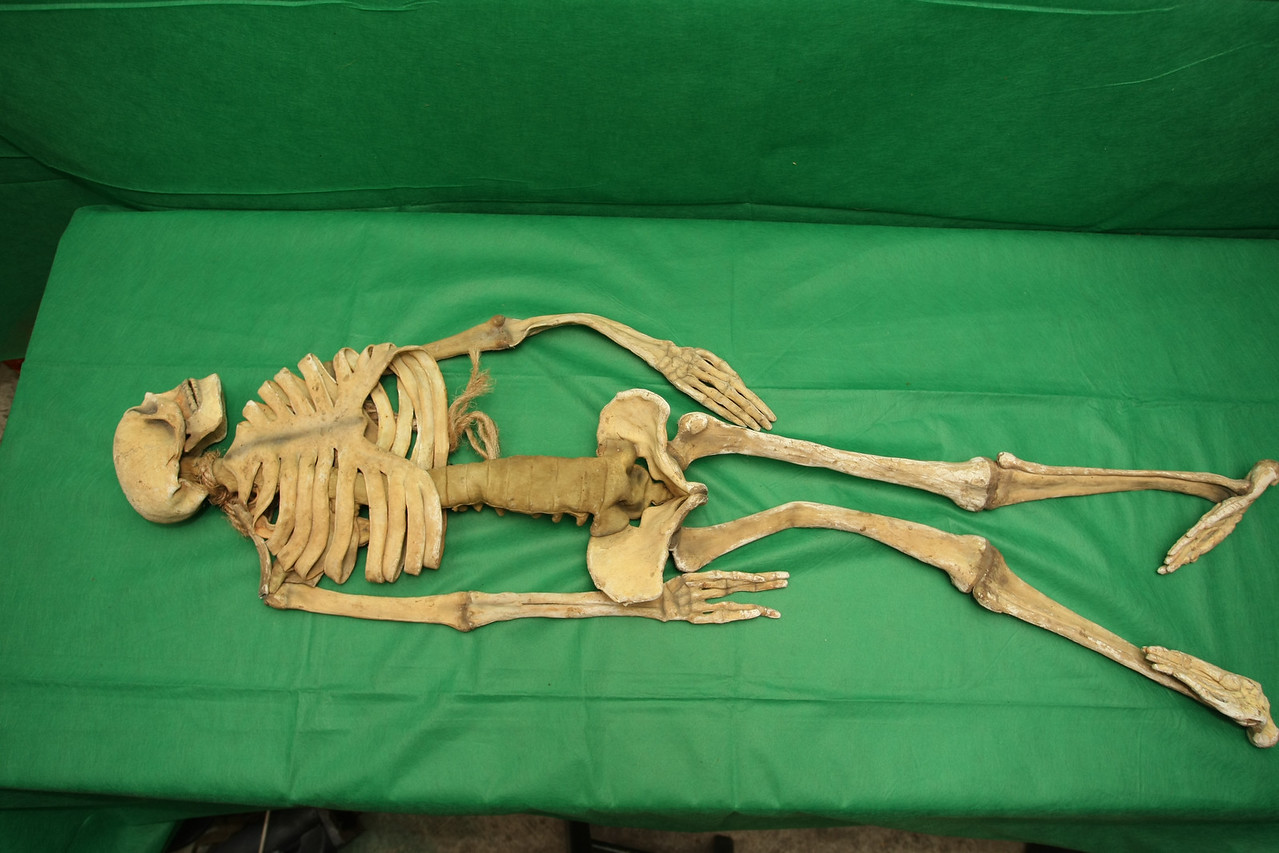 Skeleton 3 - front view