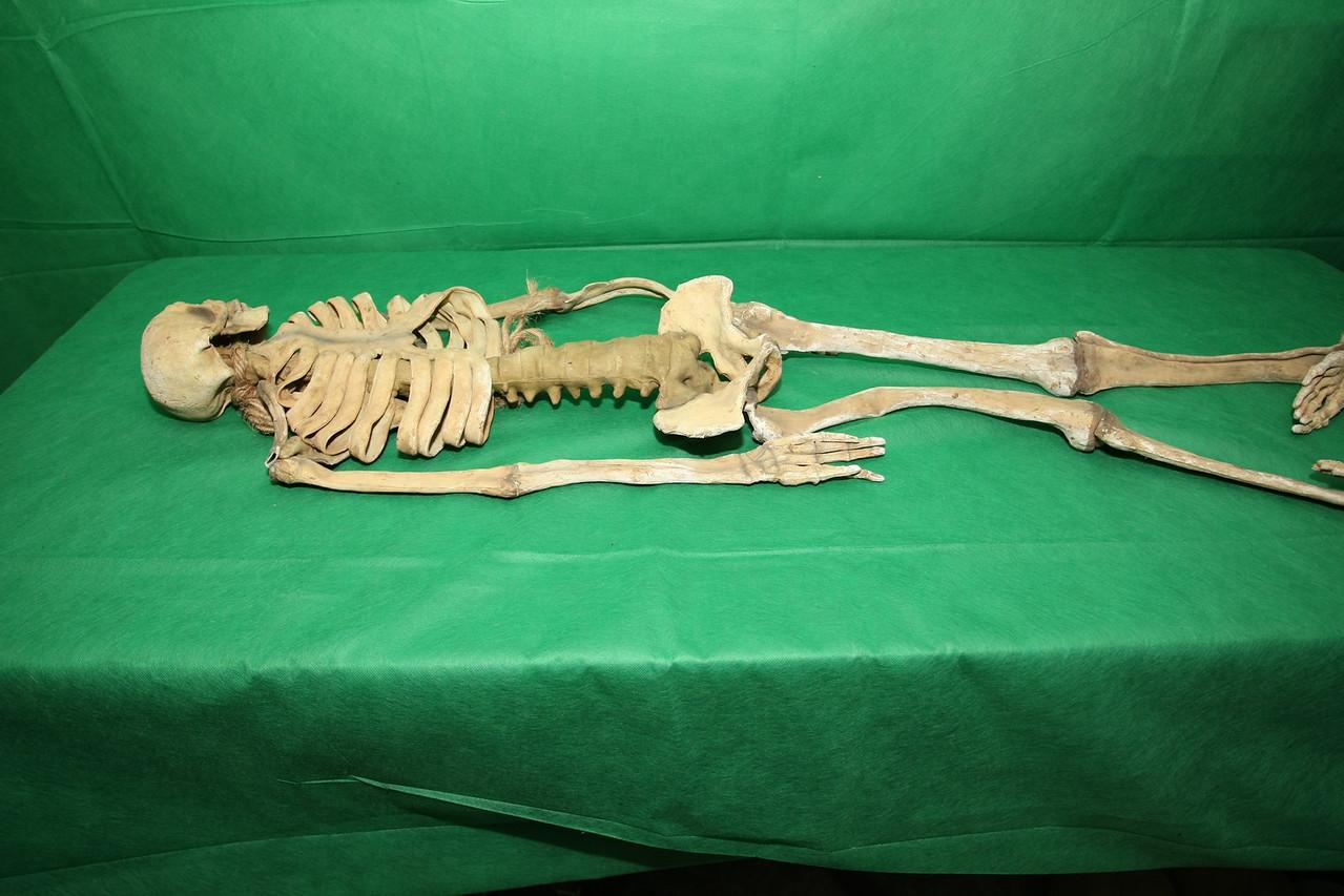 Skeleton 3 - side view