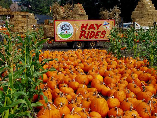 Halloween -  Arata Farm Half Moon Bay