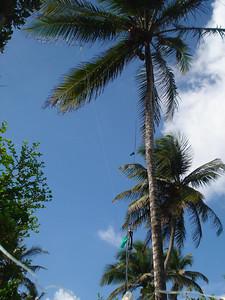 80m Inv L up plam tree