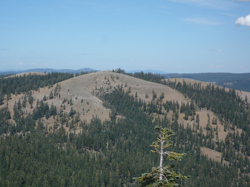 "<a href=""http://www.grizzlyguy.com/HamRadio/SOTA-Activation-W6NS159-Pt8166"">Pt. 8166 (W6/NS-159)</a> is a short distance away to the north and the Pacific Crest Trail runs up and over it as well. The saddle between it and Lacey Benchmark is about 800 feet down below me and not visible in the shot."