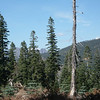 """Visible through the trees to the north, the jagged <a href=""""http://www.grizzlyguy.com/HamRadio/SOTA-Activation-9202012-Sierra"""">Sierra Buttes (W6/NS-139)</a> juts up onto the skyline."""