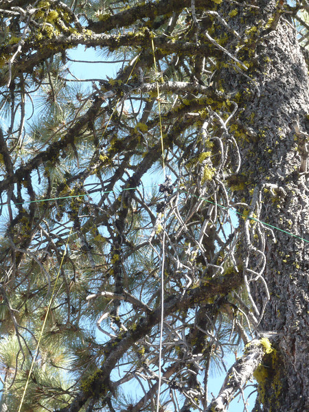 A closer shot of the dipole hanging in the tree.