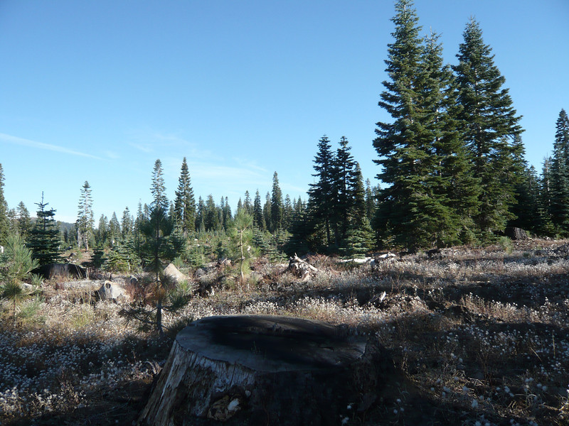 The summit of Pt. 6522 (W6/NS-273) is out there somewhere. My hike ended up being longer but flatter than I had planned. There is no trail and you just make your way through the forest and old logging slash. It's not the most scenic summit and has limited views due to all the trees.