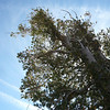 My doublet up in the tree. As usual, I tossed my Zing-it throw line up into the tree using a rock in a small ditty bag.