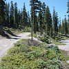 This is the trailhead, the 4x4 road to the summit of Mt. Watson (16N73E) begins here along the paved road from Brockway Summit.