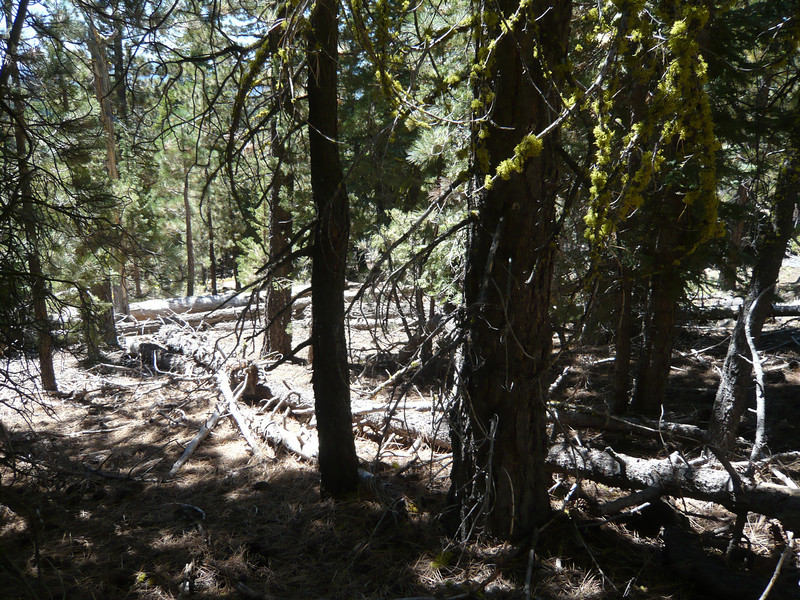 There are numerous downed trees from the fire that roared through this area many years ago, but they are easy to go around or over.