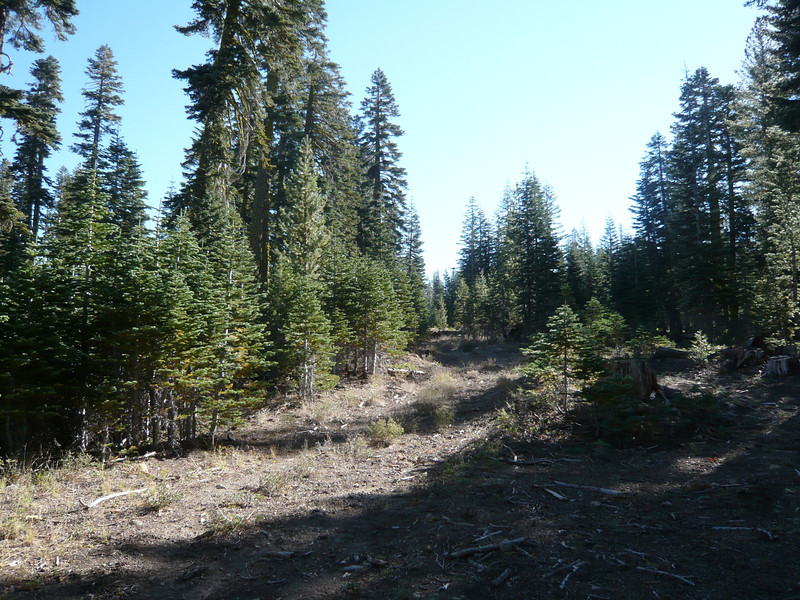 "Pt. 8060 isn't spectacular, just a forested hill top in an area of Tahoe National Forest that most people would never visit. For maps and directions, see <a href=""http://www.grizzlyguy.com/HamRadio/SOTA-Pt8060-W6NS166-2013"">this album from a later activation</a>. I ride through the area pretty often on my way north from Truckee to Gold Lake and points beyond. After parking my ATV in the shade just off the road that is signed as ""Ridge Loop"", I decided to hike up this old logging road that looked like it might go to the summit."