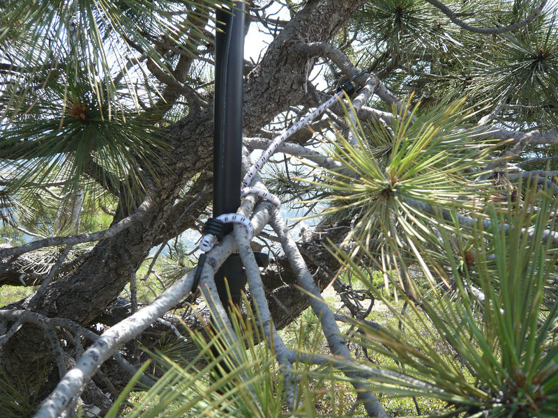 Close-up of the bungee lashing the mast to the pine tree branch.