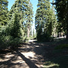 The road climbs gradually through the forest. The trees in this area are primarily firs. The total hike along this route from the gate to the summit is about 1.1 miles with an elevation gain of about 220 vertical feet.