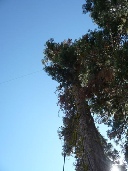 I chose this one that is about 1.5 vertical feet below the bump of dirt that I proclaimed to be the actual summit. My 20/40m link dipole is hanging from a limb about 30 feet up.