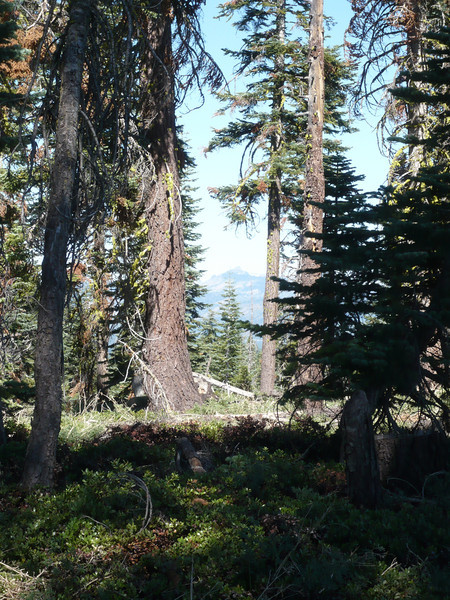Looking back towards the northwest, Castle Peak (W6/SN-038) is visible through the trees.