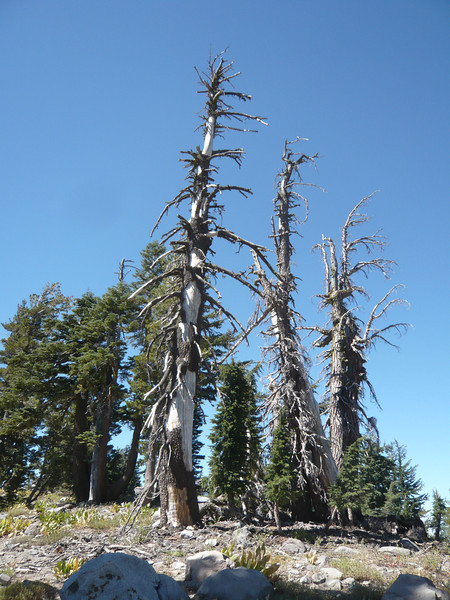 I'd spotted this collection of dead trees (great for hanging antennas) about 30 vertical feet below the summit on my way up.