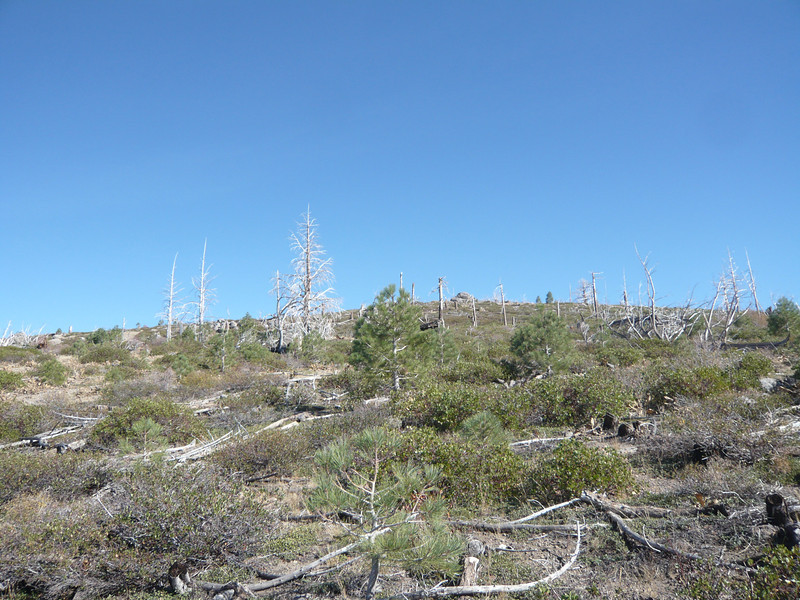 This is what you climb through: brush and dead fall from the 1994 fire.