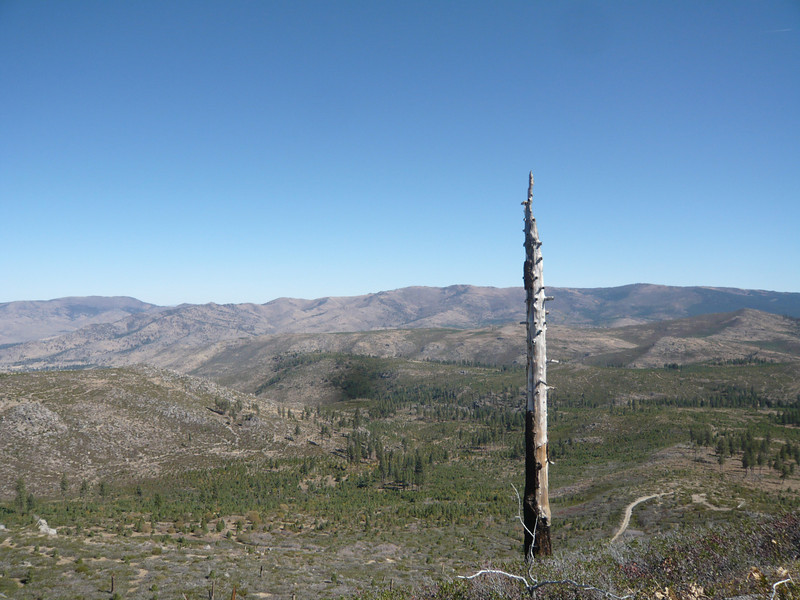 Looking toward the northeast, this one old snag is all that remains standing after the 1994 fire.