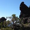 Lava and juniper trees.
