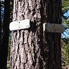 Last year a guy told me that my unofficial route used to be the official trail to the summit. I guess he was right because I spotted these old trail signs up on a fir tree in the lower forested section. I could see no signs of an actual trail, other than game trails.