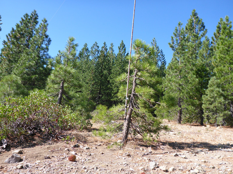 I bungeed the Jackite pole to a small pine, and tied off the ends of the doublet to other small pines. The antenna ended up being oriented parallel to the steep downslope, basically NE-SW.