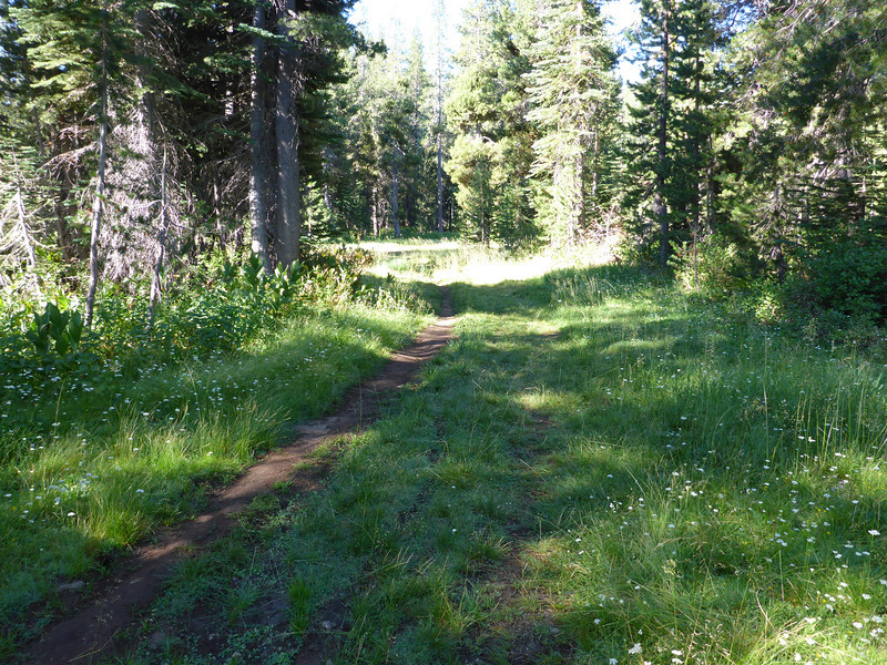 After leaving Kilborn Drive and winding through the forest for about 125 yards (430 trail feet per my GPS), the trail will emerge into this narrow meadow. Turn left and follow the meadow as it continues to meander a bit more to the left. This photo is looking in the direction that you want to go.