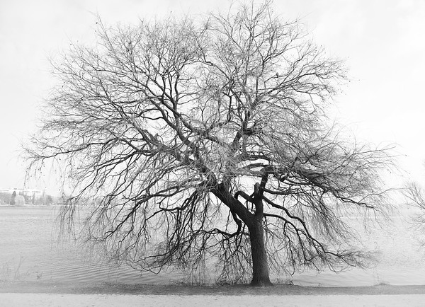 Baum an der Alster in schwarz-weiß Hamburg