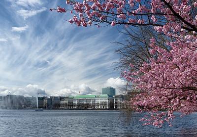 Binnenalster mit Wasserfontäne in Hamburg bei Kirschblüte und dramatischen Himmel