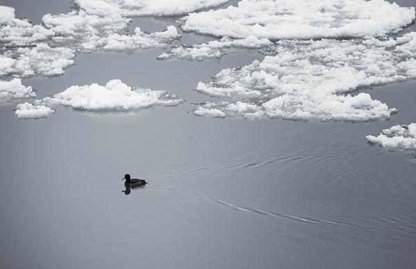 Bild-Nr.: 20120211-IMG_8211-e-Andreas-Vallbracht | Capture Date: 2012-02-11 14:55