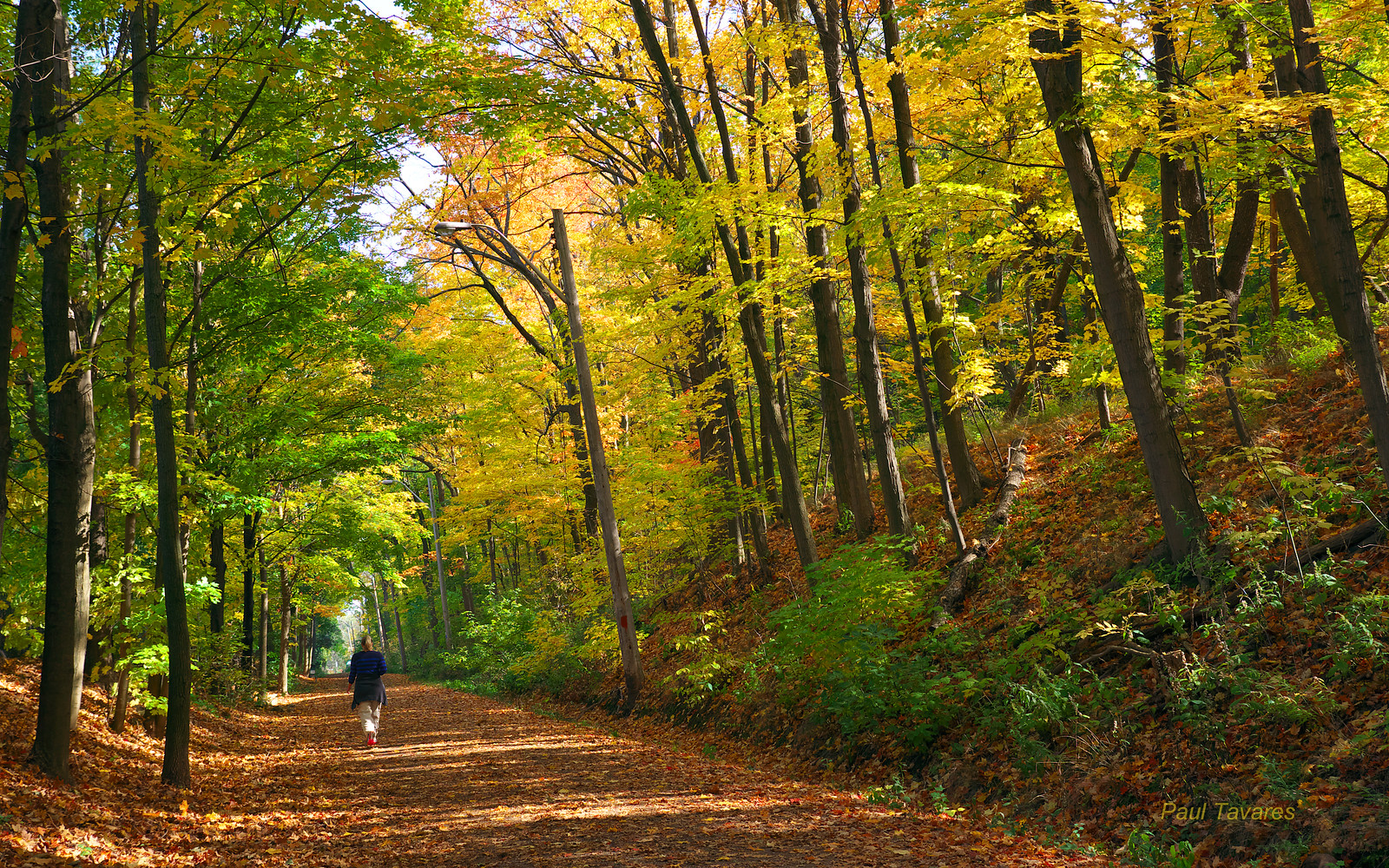Chedoke Radial Trail