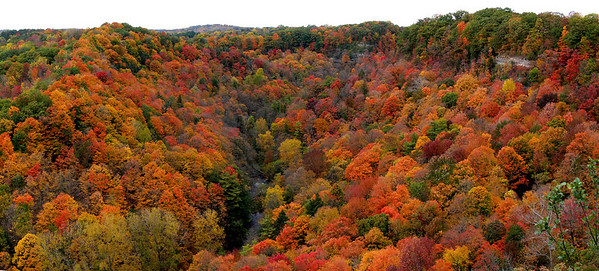 Fall colours in Spencer Gorge