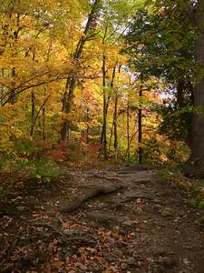 Webster's Falls trail
