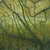 Hazels Dooney Wood
