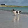 Hamish on the Isle of Westray, Orkney