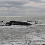 Hampton & Rye Beach - Waves & Snowy Owl