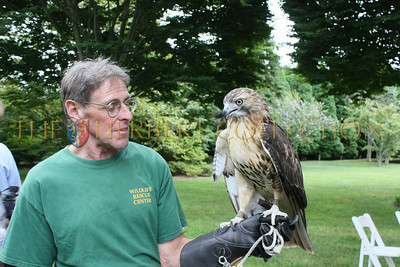 Volunteer with a red tailed hawk