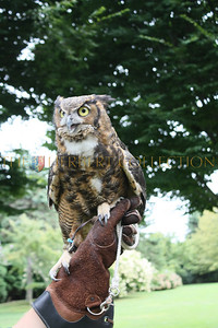 Great horned owl held by Dennis Fleury
