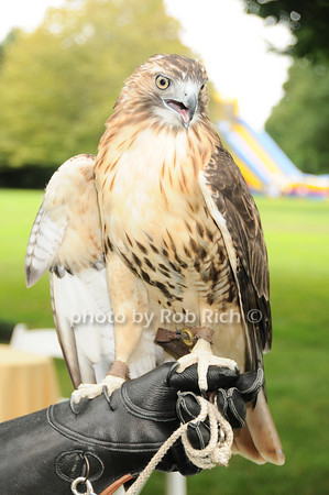 Sonia (Adult female Red Tailed Hawk)<br /> photo by Rob Rich © 2010 robwayne1@aol.com 516-676-3939